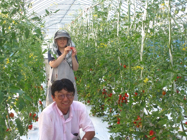 20130725篠原園芸のミニトマト開始 (29)