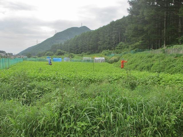 20130804草刈り (2)