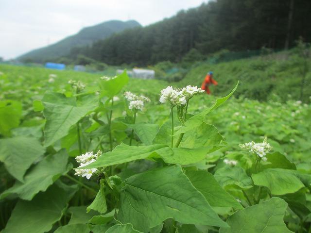 20130804草刈り (4)
