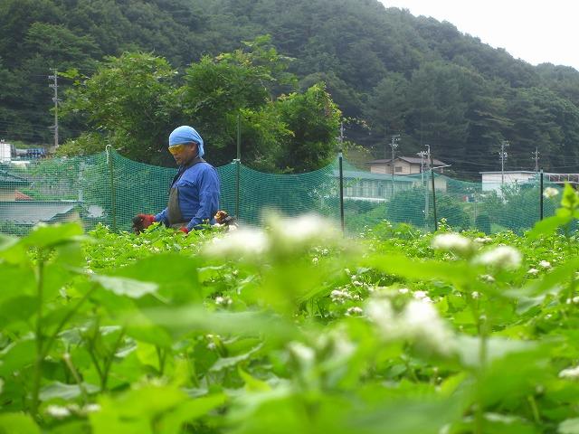 20130804草刈り (5)
