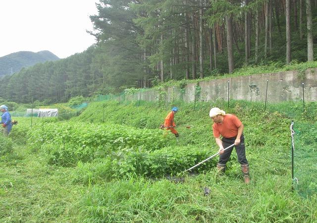 20130804草刈り (9)