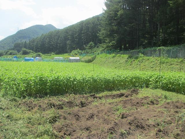 20130804草刈り (40)