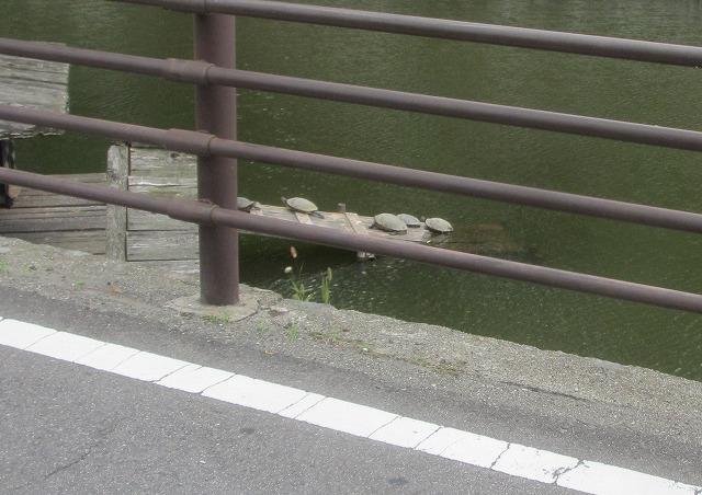 20130804高島城の亀 (1)