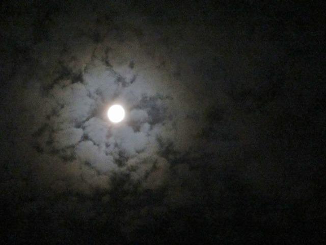 20130820月夜 (15)