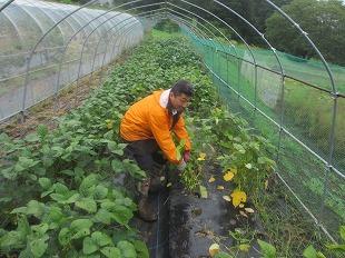 20130825渡辺さんの畑で枝豆 (7)