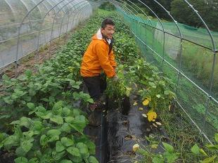 20130825渡辺さんの畑で枝豆 (10)
