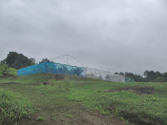 20130825渡辺さんの畑で枝豆 (12)