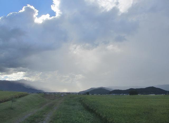 20130903エコーラインの稲と雨模様 (5)