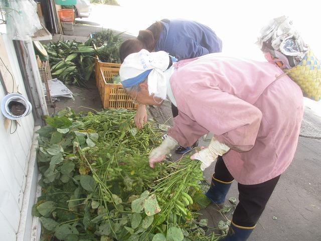 20130909宮坂農園の枝豆 (1)