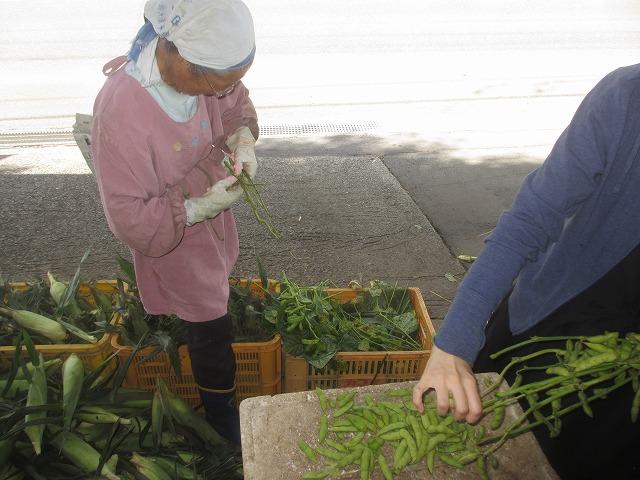 20130909宮坂農園の枝豆 (3)