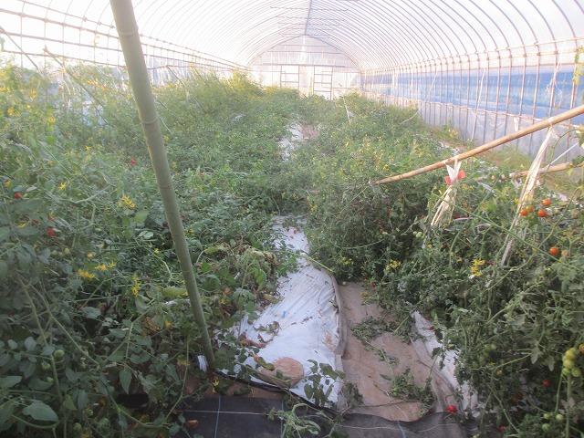 20130917篠原さんの台風被害 (3)