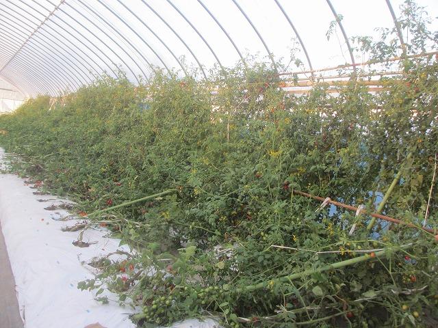 20130917篠原さんの台風被害 (5)
