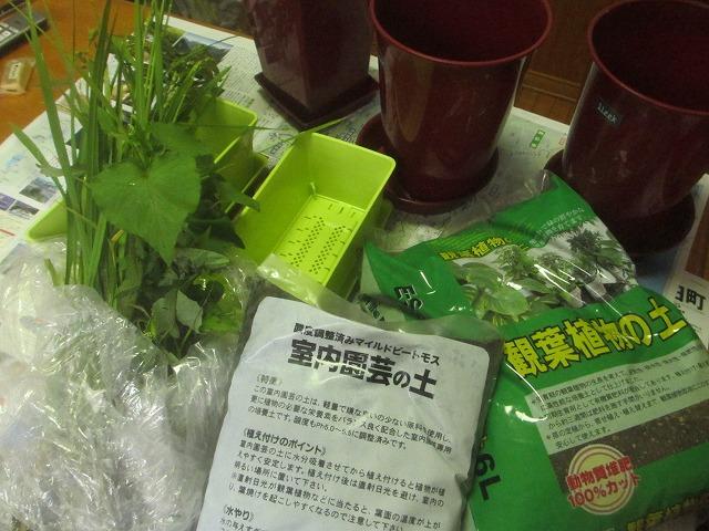 20130901名取さんの稲 (10)