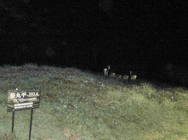 20130902夜の鹿 (4)