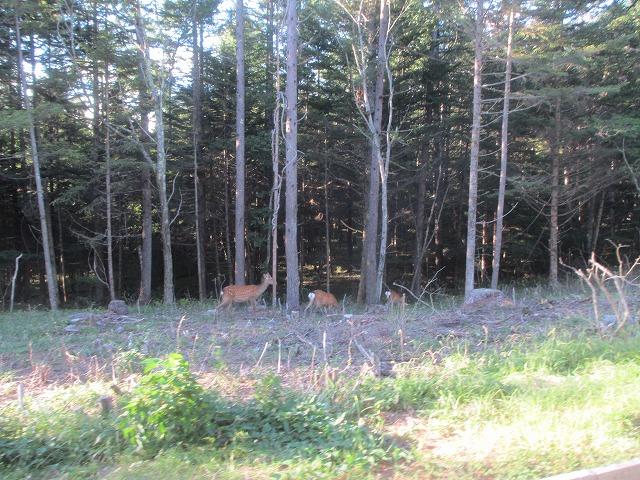 20130903エクシブ前の鹿 (3)