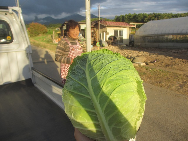 20131001キャベツみたいな白菜みたいな (4)