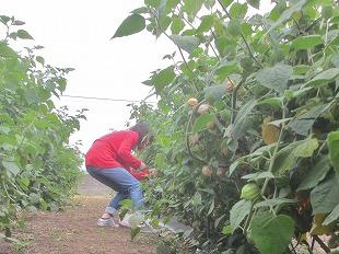 20131001バディアス農園で (14)