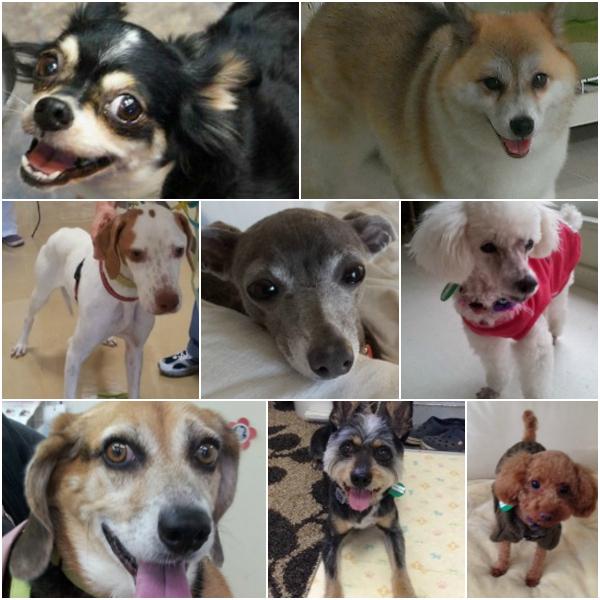 dogshelter01_20140118183956560.jpg