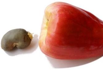 cashew_nut_cashew_fruit-dsc06868.jpg