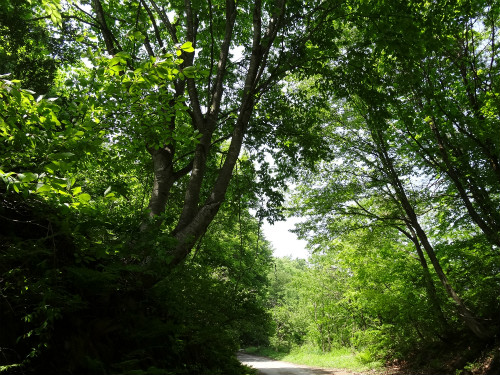 林道・瀞川線 緑の中で