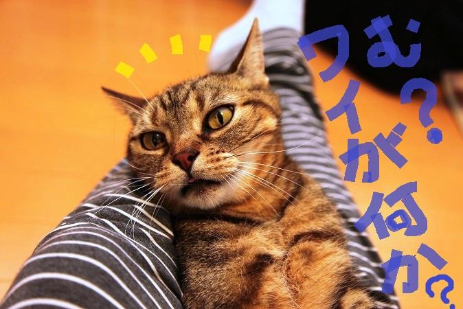 (11)_20130701154330.jpg