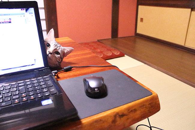 blog_000983.jpg