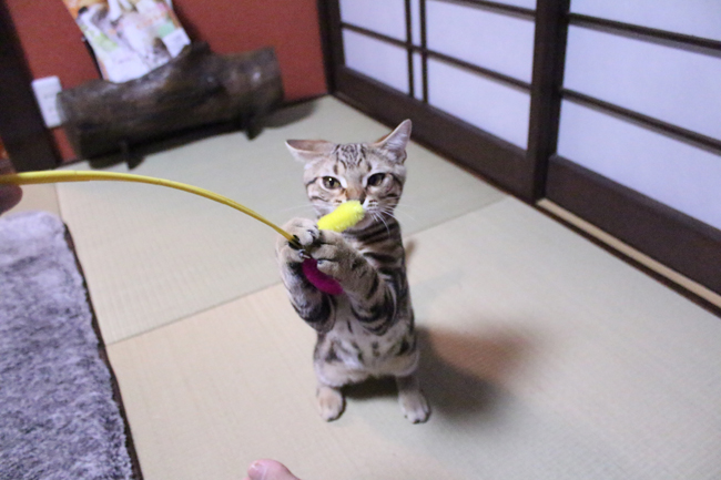 blog_00412.jpg