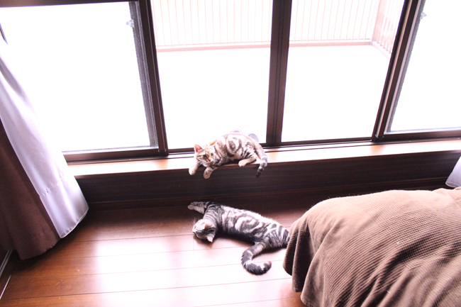 blog_00451.jpg