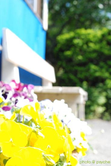パンジーと白いベンチ。