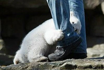 polar_bear_attack_01_m.jpg