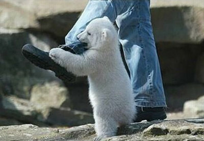 polar_bear_attack_02_m.jpg