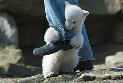 polar_bear_attack_03_m.jpg