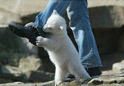 polar_bear_attack_04_m.jpg