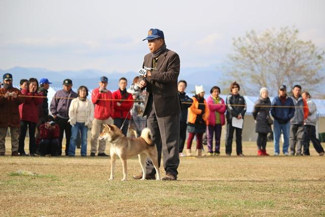 四国犬代表
