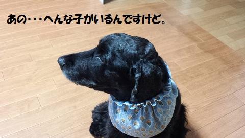 20141102_162609.jpg