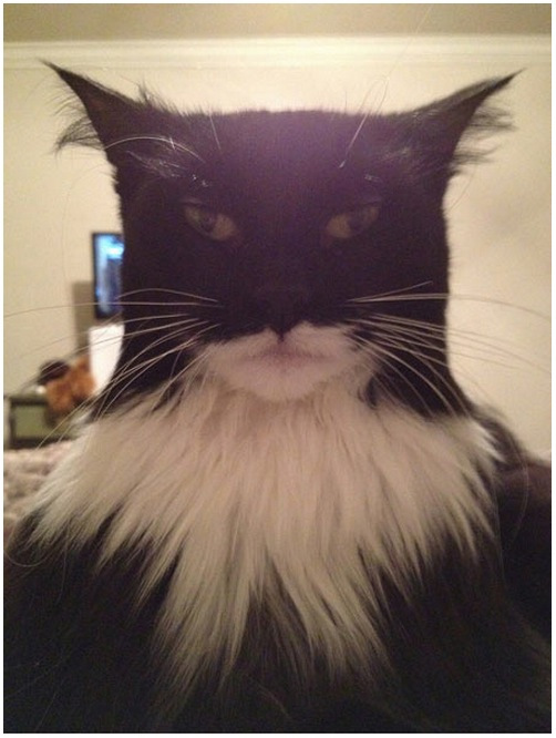 batman-cats.jpg