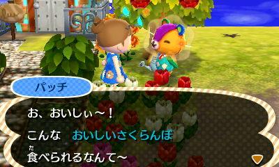 oishiisakuranbo1.jpg