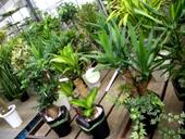観葉植物売り場