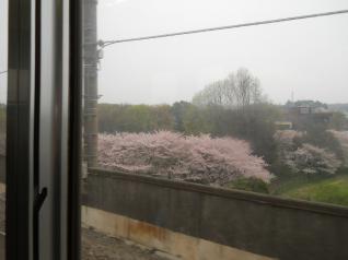 桜咲く沿線
