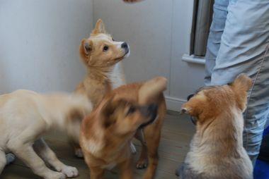141127子犬 (86)