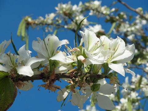 beirut flower13apr-4