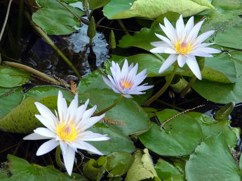 cairo flower2013may-5