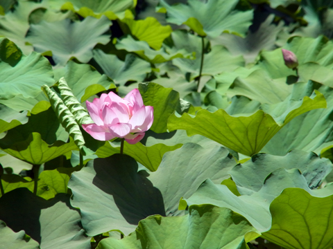 cairo flower2013may-4