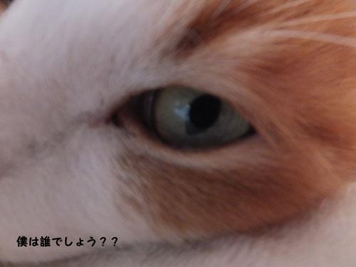 2013-10gatsu-26nichi-003.jpg