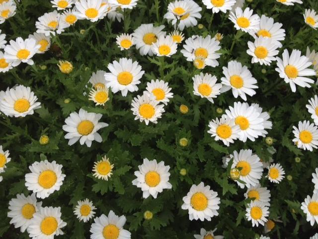 花時計の花
