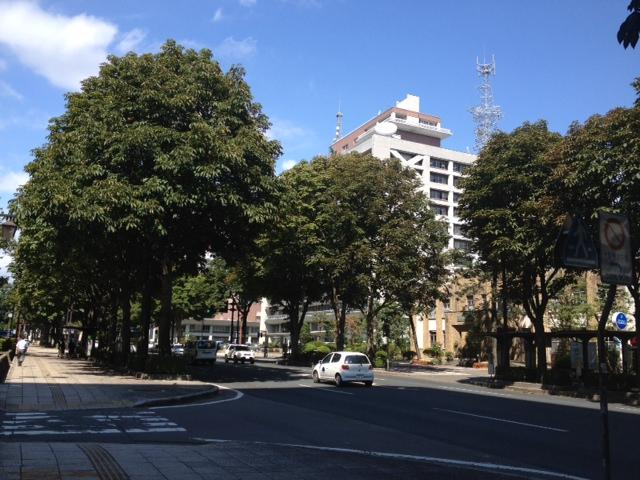 県庁マロニエ通り