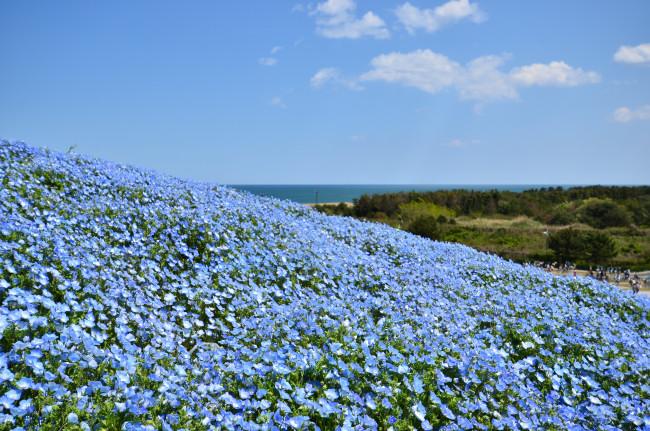 ひたち海浜公園_0045