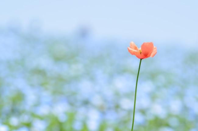 ブログ用ひたち海浜公園_0034