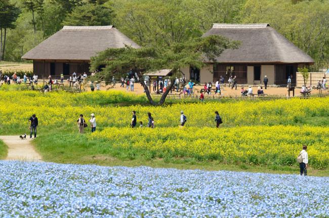 ブログ用ひたち海浜公園_0052