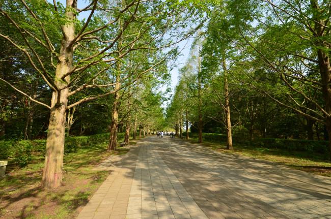 ブログ用ひたち海浜公園_0320